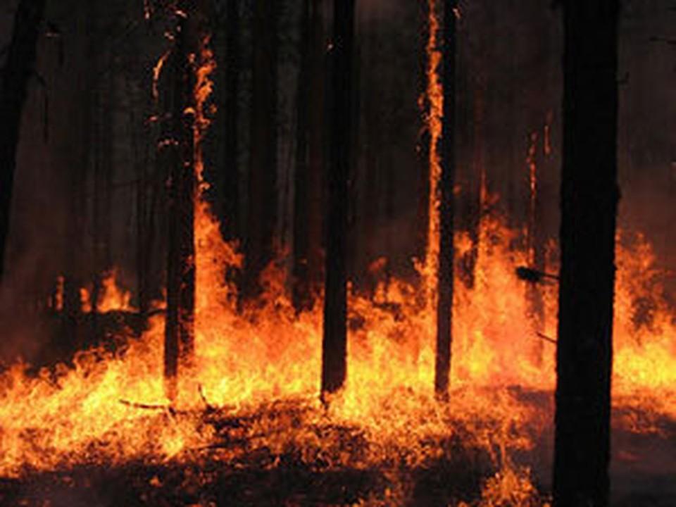 В Якутии горят леса.