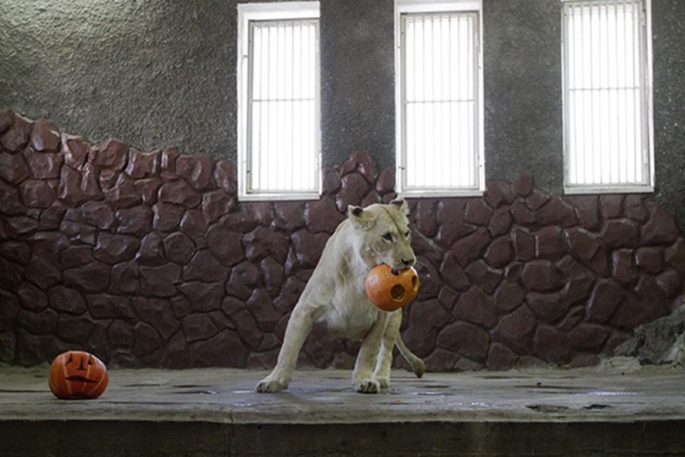 Львы в Роевом Ручье отметили Хэллоуин