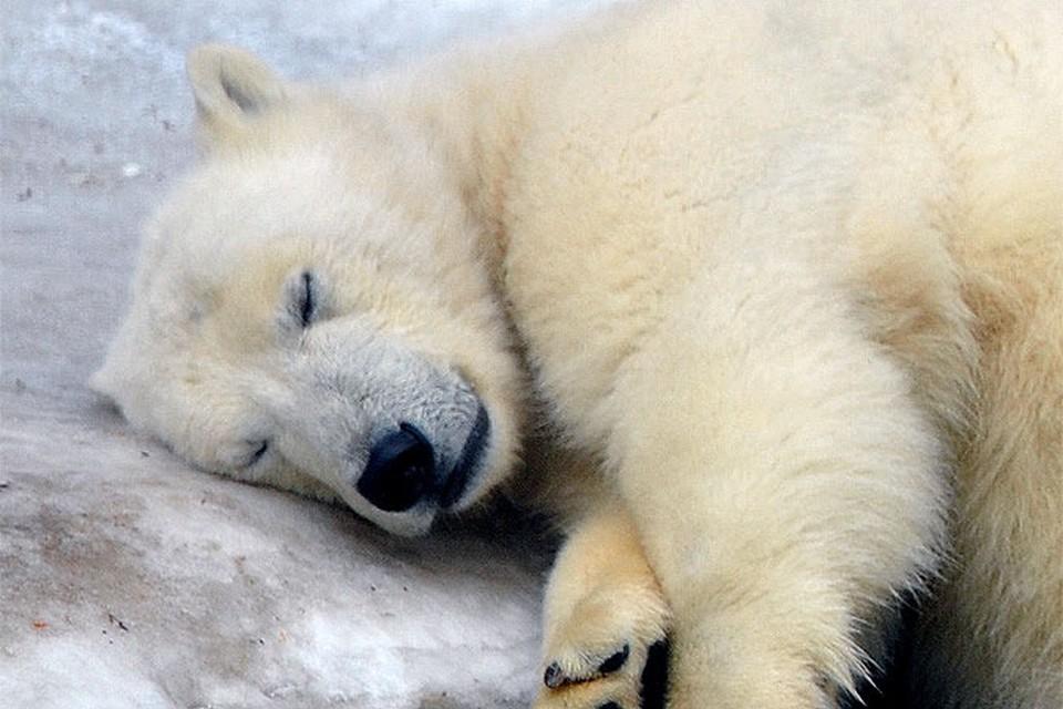 Участники экспедиции Всемирного фонда дикой природы (WWF) и Совета по морским млекопитающим обнаружили останки двух недавно убитых белых медведей.