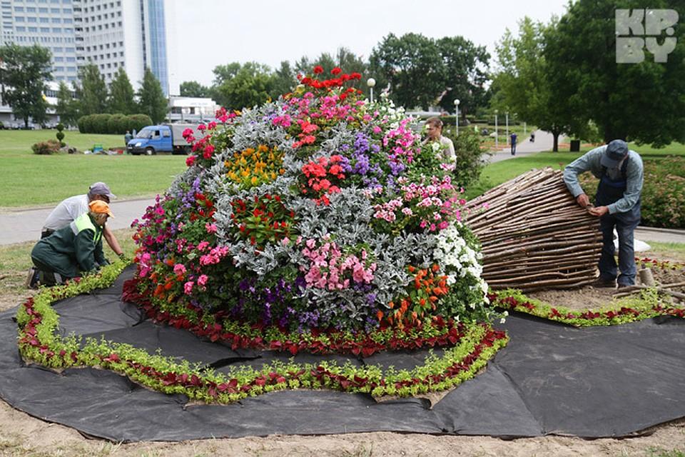 клумбах композиций фото цветочных в