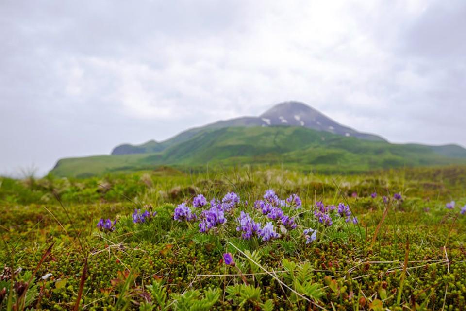 Остров Матуа - средняя часть Курильской гряды.