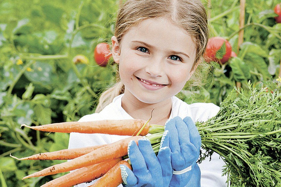 В Московской области морковь надо копать в конце сентября, а еще лучше в начале октября.  Фото: PhotoXPress.ru
