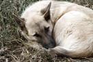 В Красноярске выбрали нового подрядчика по отлову бродячих собак