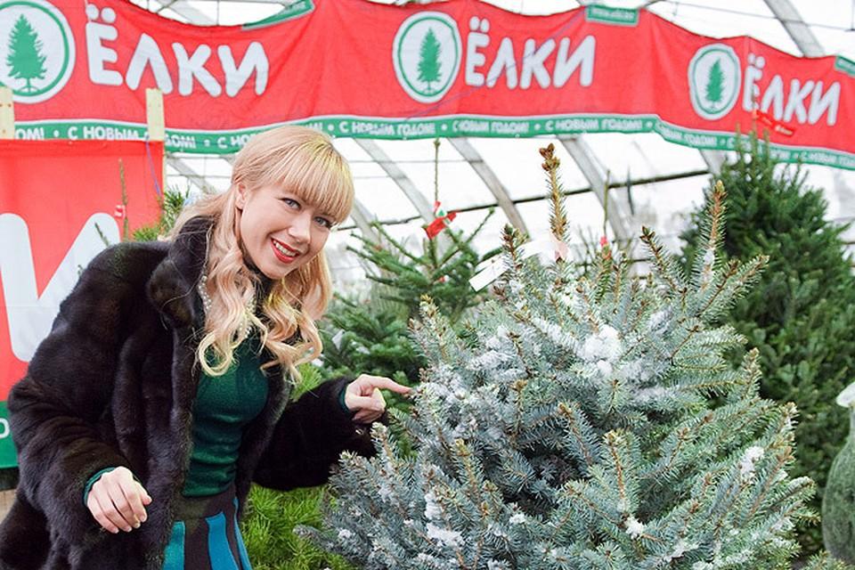 В Москве открываются елочные базары