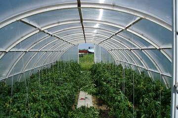 Теплицы в Краснодарском крае - залог большого урожая