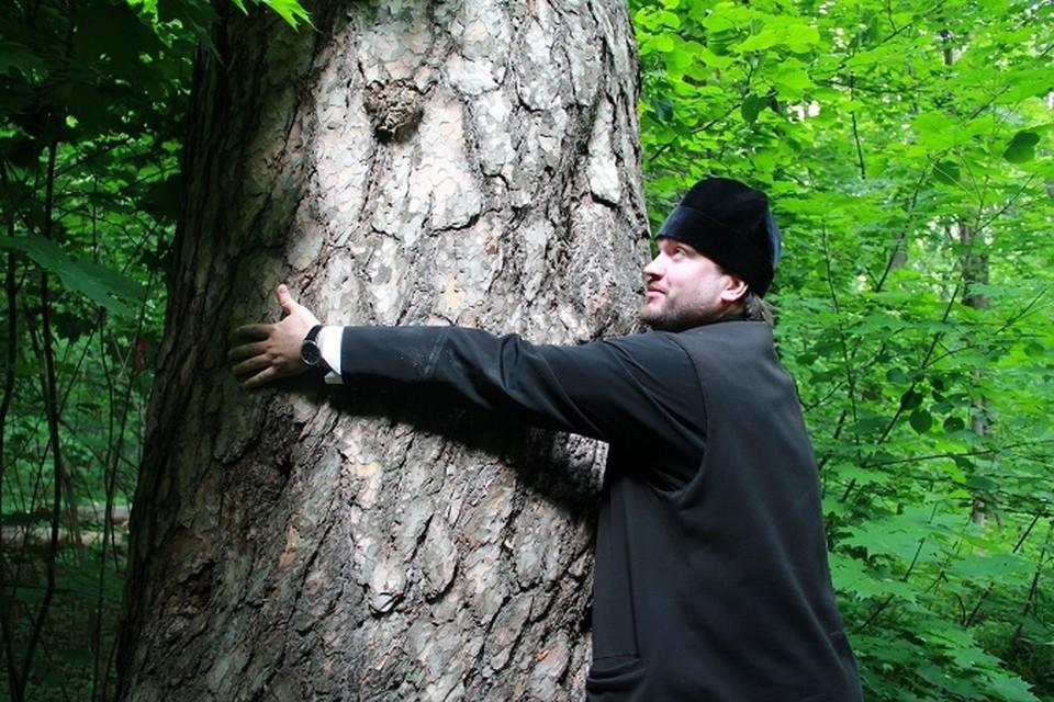 Дереву не менее 350 лет!