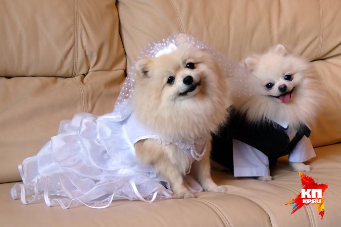 Картинки по запросу Невесты с собаками