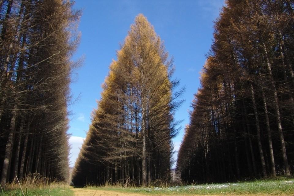 Фото: Департамент лесного комплекса Кемеровской области