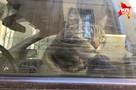 Кота, запертого в машине, переселят в гостиницу для животных