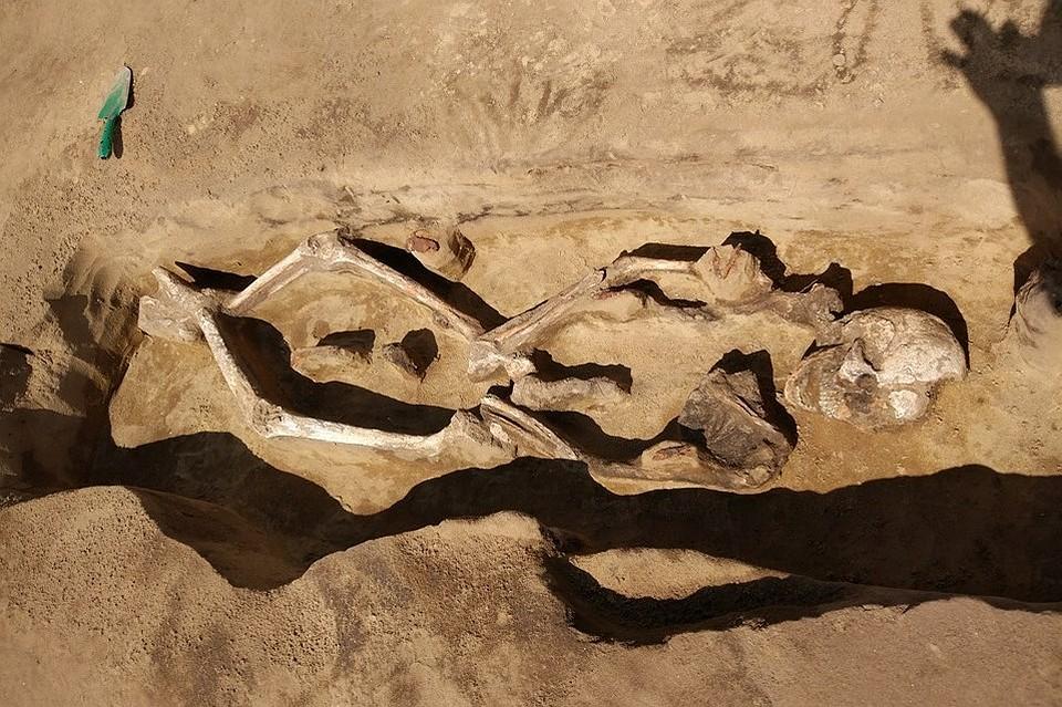 Амурские археологи нашли древний скелет со стрелами в плечах.