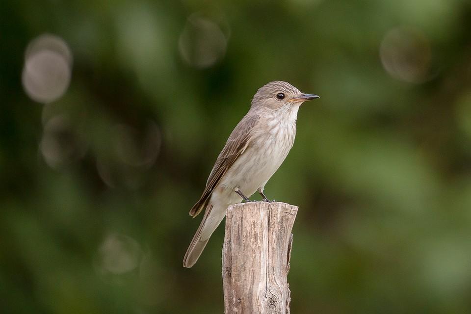 спали птицы воронежской области фото с названиями не-понаслышке, что фото
