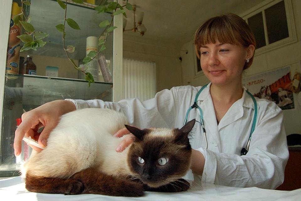 Ветеринария - профессия, замешанная на гуманизме
