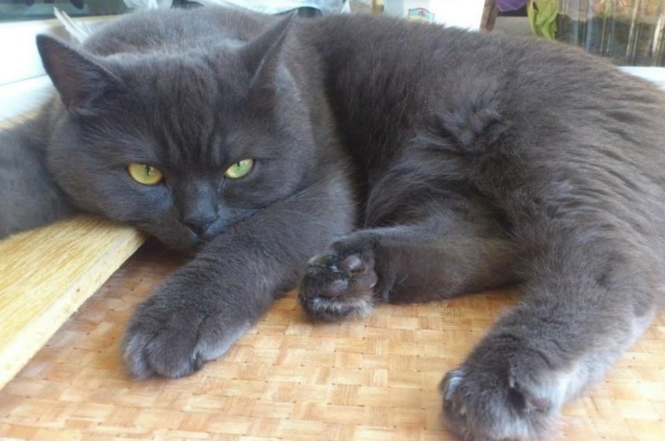Кота по ошибке усыпили в ветклинике Улан-Удэ