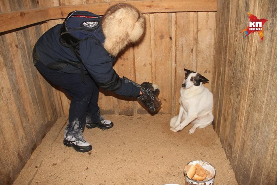 Собачий концлагерь в Семеновском районе организовала нижегородка. Фото: Игнат РОМАНОВ