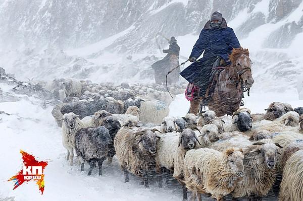 чьих овец пасут чабаны в горах если