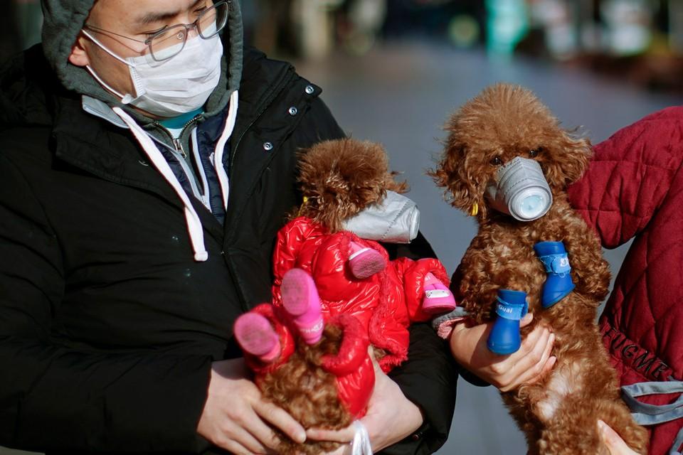 В Китае домашних питомцев стараются защитить от заражения коронавирусной инфекцией, надевая им специальные маски.