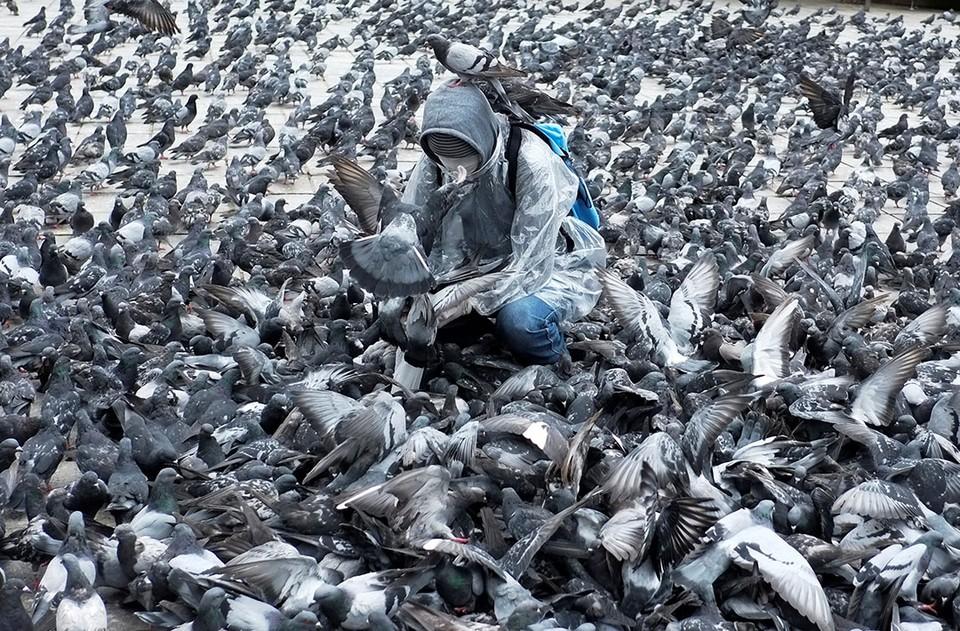 Боливиец в защитном костюме кормит голубей на площади города Ла-Паса.