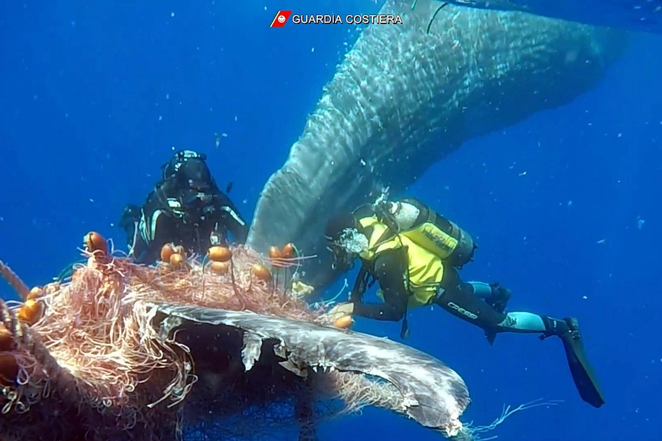 В Италии береговая охрана спасла кита. Животное запуталось в рыбацких сетях недалеко от итальянского острова Липари