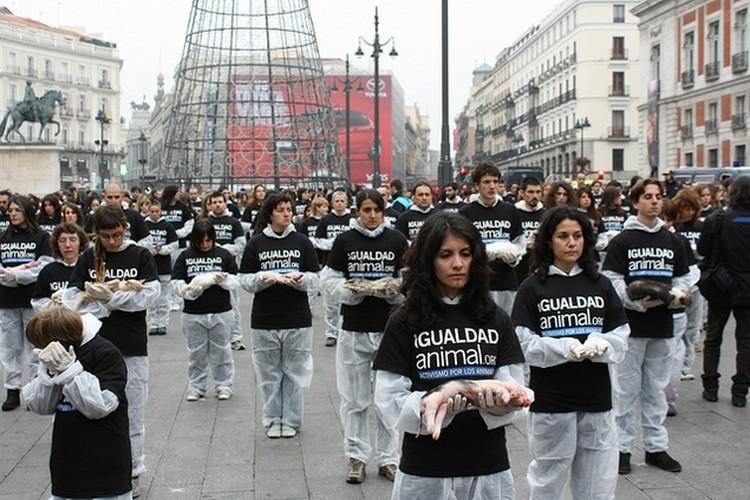 Сотня активистов вышли на площадь Мадрида, держа в руках мертвых зверушек, птичек и даже рыбок. Фото: IgualdadAnimal.org