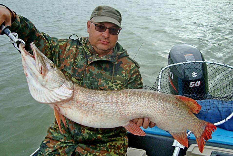 Рыбак с огромной рыбой картинки