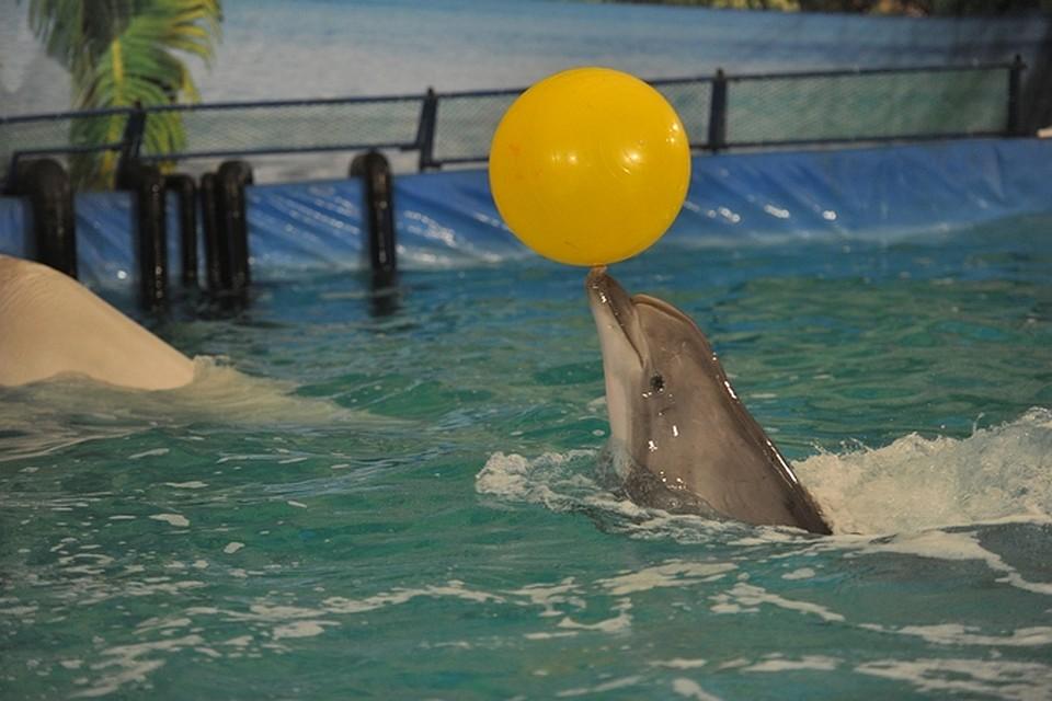других дельфинарий в рязани фото сервисом
