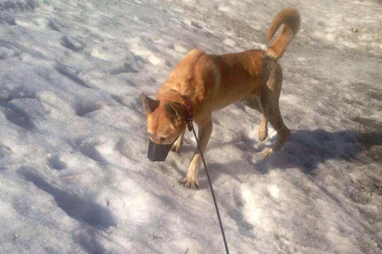 Зоозащитники недавно нашли пострадавшую собаку, у нее оказались перебиты задние лапы. Фото: Анастасия ДУЮНОВА