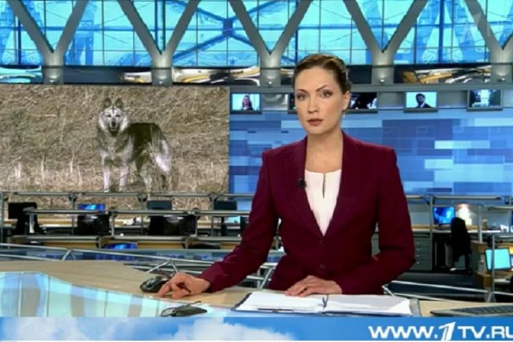 """Фото: скриншот с видеосюжета """"Первого канала"""""""