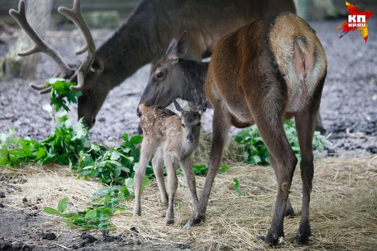 В ставропольском зоопарке пополнение