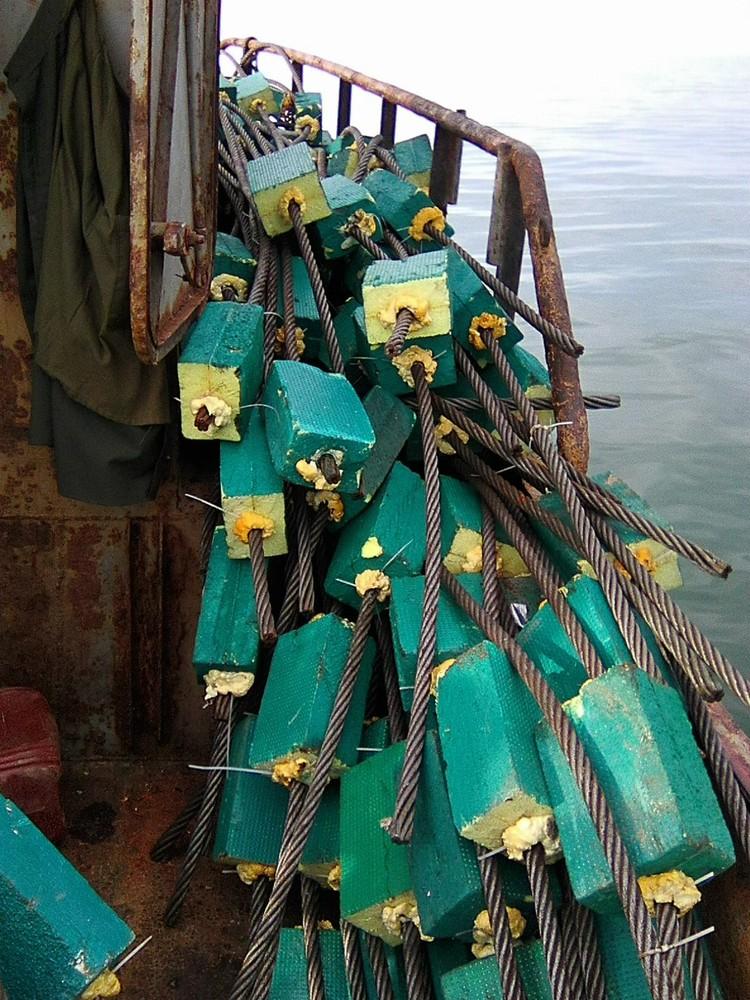 Эти тросы течение должно было принести в Керченский пролив. Фото: предоставлено Аблязимовым