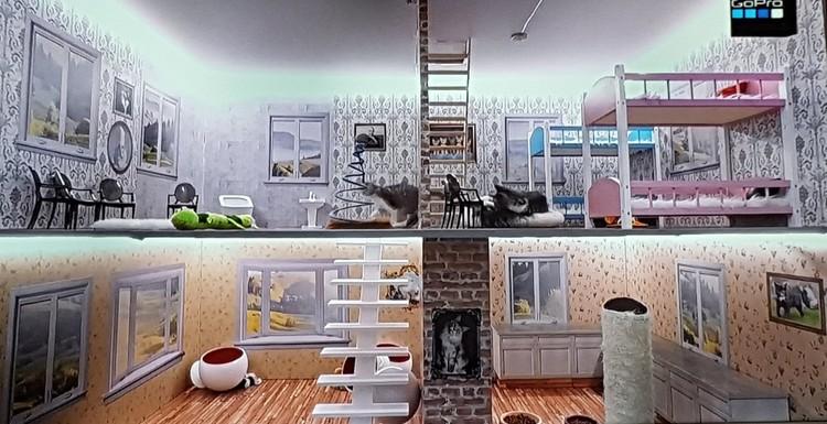 """Как и в обычном """"Доме-2"""" без драк в шоу не обходится. Фото: Facebook @Kattarshians"""