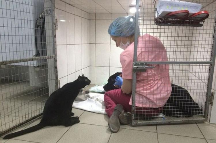 Фото: ветеринарная клиника Клык.