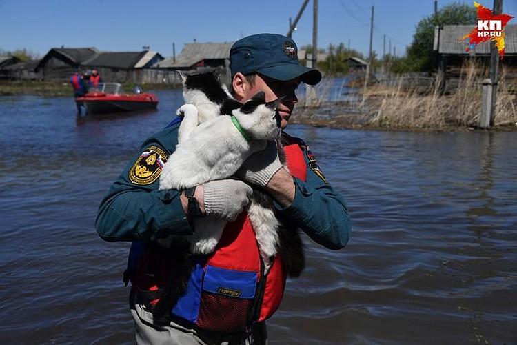Спасатели отвезли мурок на незатопленные паводком места