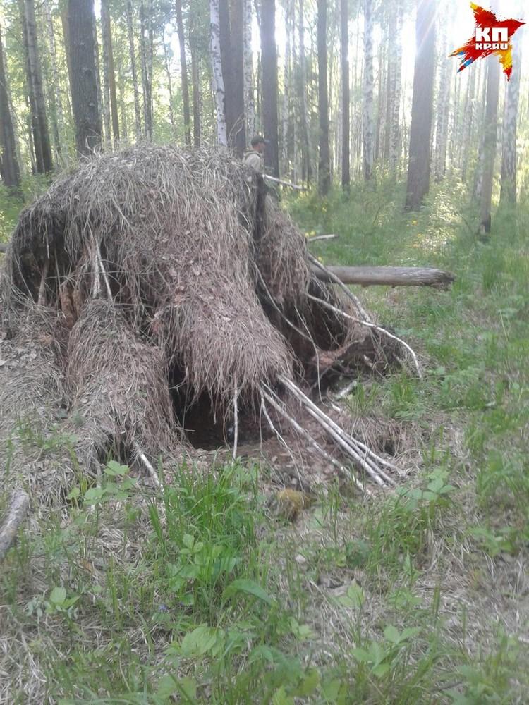 Диму нашли в километре от берлоги медведя