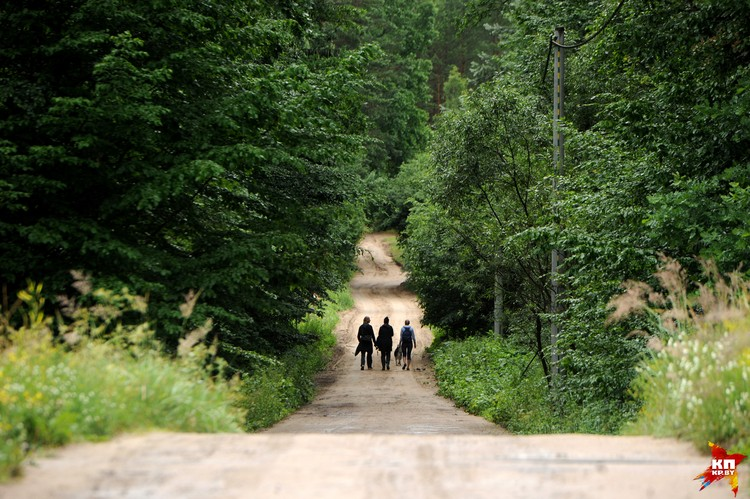 Поляки завидуют тому, что в белорусской части Беловежской пущи не происходят варварские вырубки деревьев.
