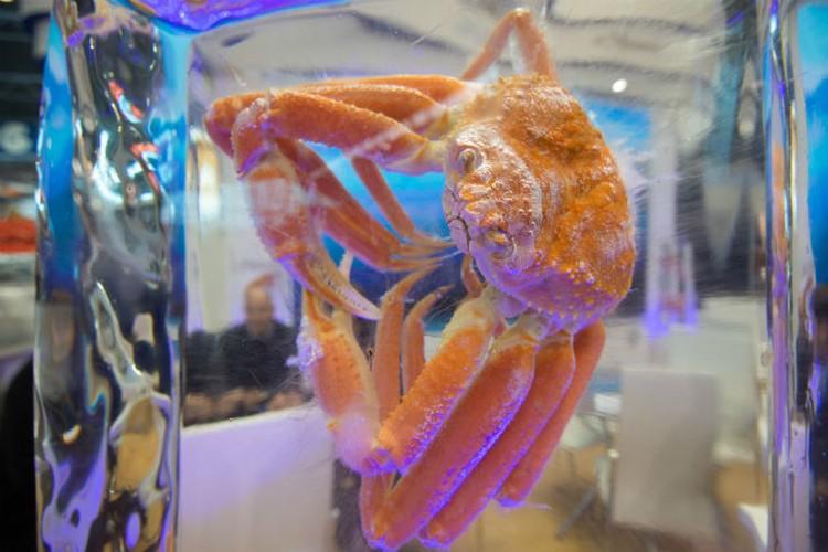 Эксперты считают, что морепродукты сильно помогут решить вопрос продовольственной безопасности нашей планеты