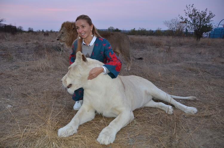 Герда - редкий белый лев. Фото: Татьяна Алексагина.