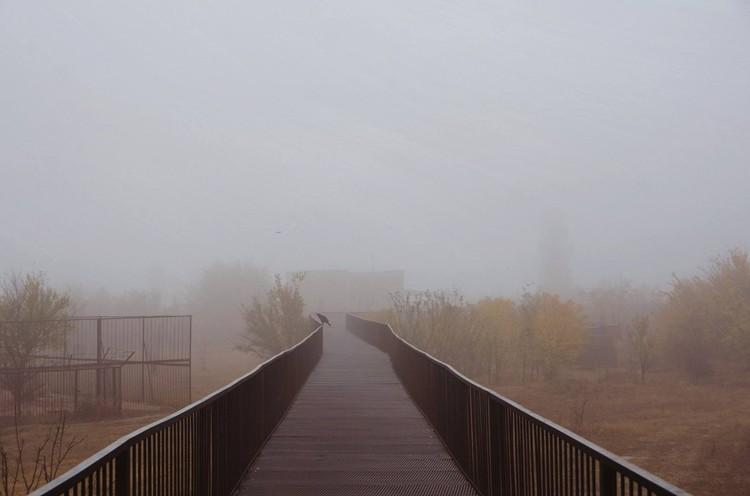 В тумане трудно понять, что произошло в прайде. Фото: Татьяна Алексагина.