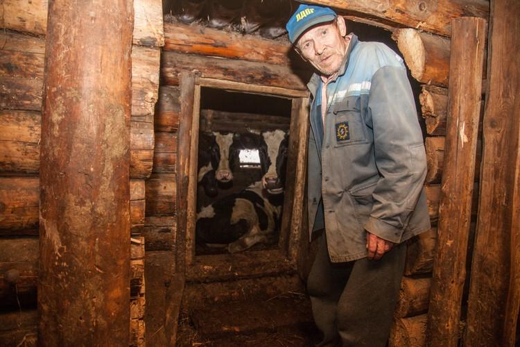 Каждый обитатель приюта выполняет посильную работу. Анатолий следит за коровами и телятами