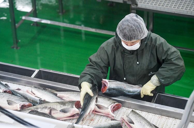 Прогноз по ценам на рыбу благоприятный