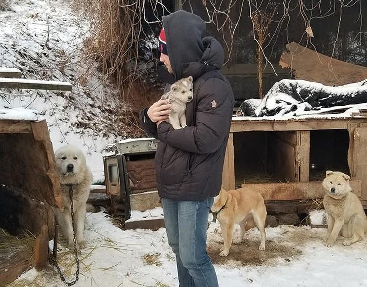 Гас договорился вывезти 90 щенков с одной из южнокорейских ферм.