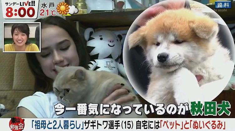 Алина давно мечтает о собаке породы акита-ину и скоро её мечте суждено сбыться.