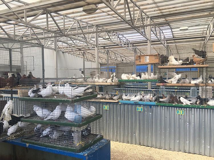 Купить на «Птичке» можно практически все, что связано с живностью