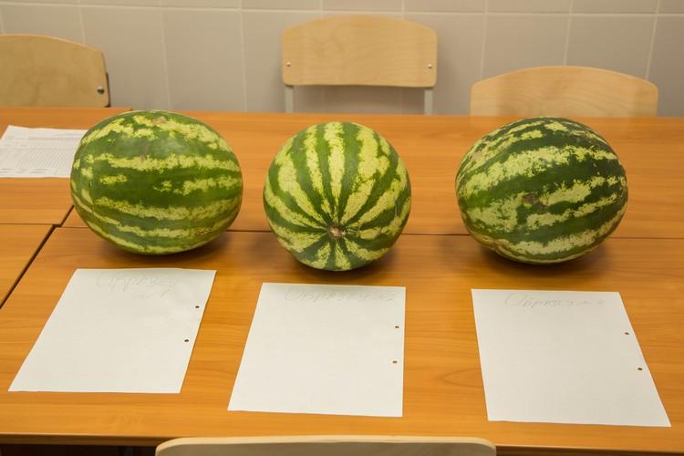 Для чистоты эксперимента ученым мы не сказали, где какой арбуз куплен. Фото: пресс-служба Ургэу