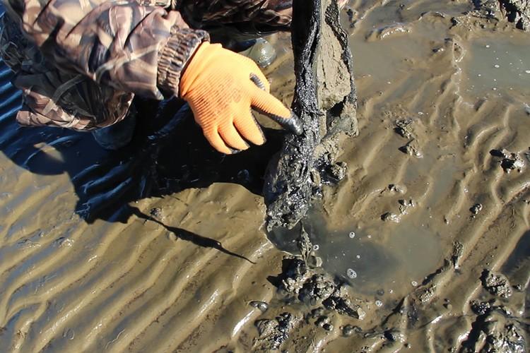 На найденной кости сохранились ткани мамонта. Фото: Академия наук Республики Саха