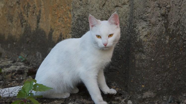 Так кошка выглядела до «концлагеря». Фото хозяйки.