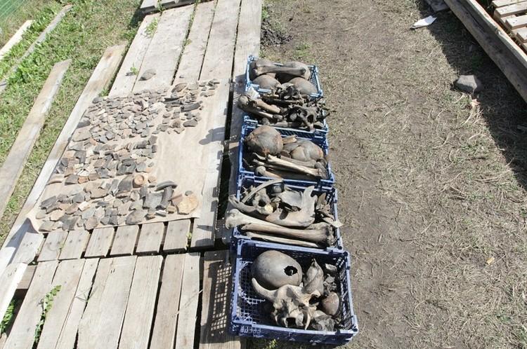 Обнаруженные кости археологи аккуратно складывают в ящики