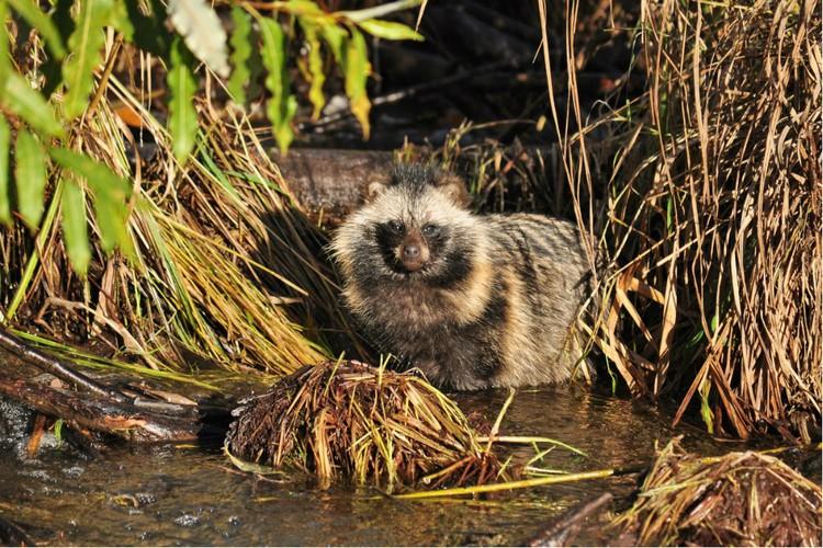 В «Нургуше» живут редкие виды животных. Фото: Николай ХОДЫРЕВ