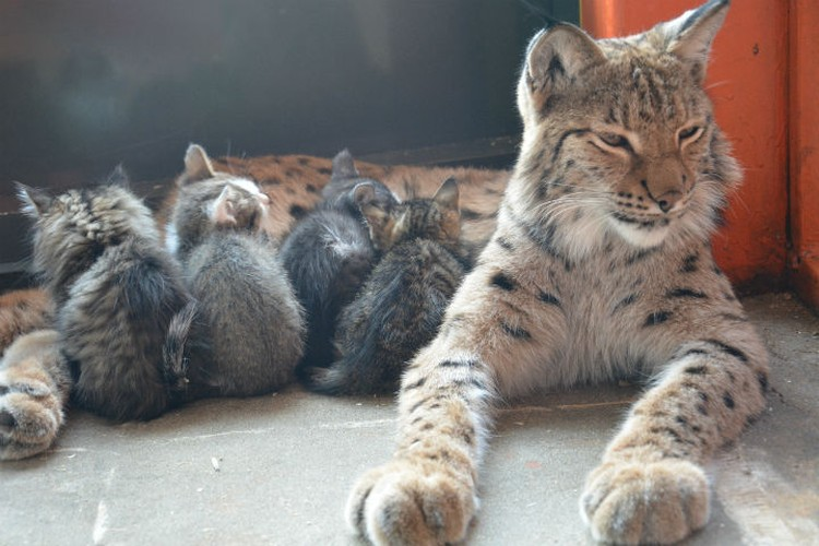 Фото: предоставлено зоопарком.