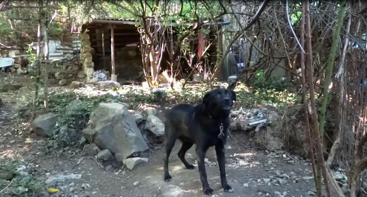 Девушку охраняли злые собаки. Фото: кадр видео