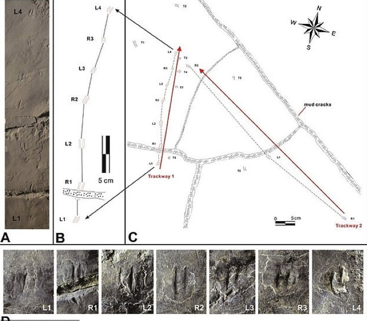 Схема, на которую нанесены цепочки обнаруженных следов.